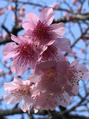 17sakura02.jpg